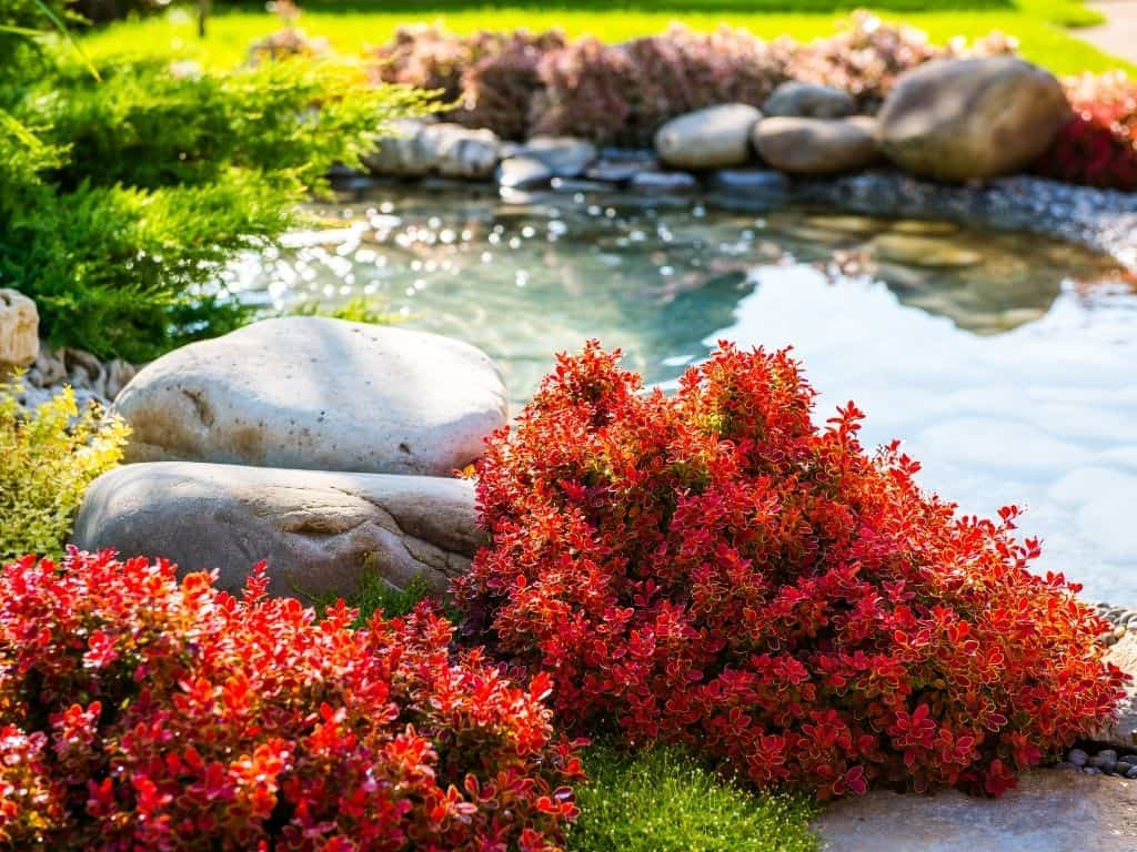 Sustainable Landscaping: Why, What, How to Start?